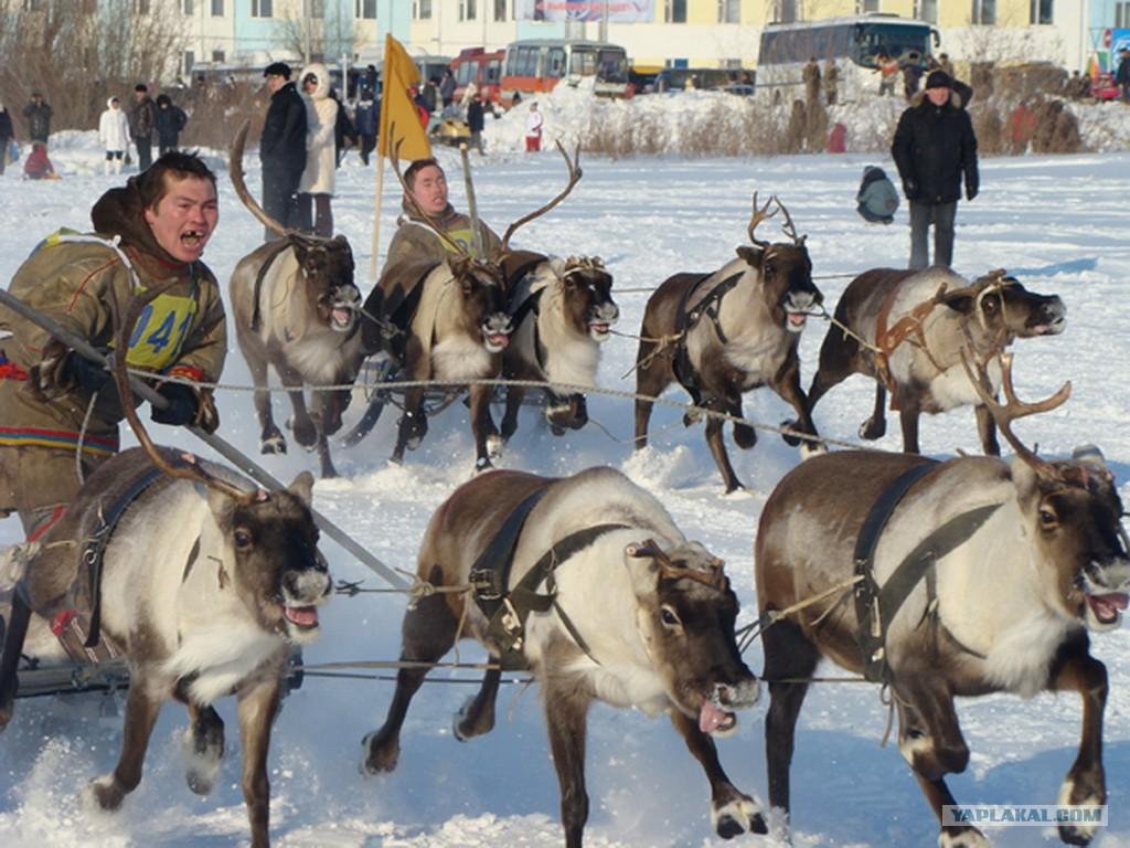 Губернатор Ямала вручил кубок победителям соревнований оленеводов