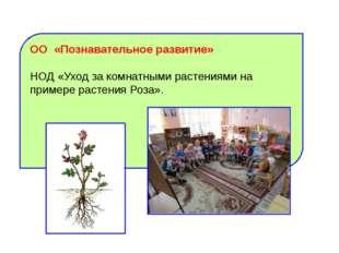ОО «Познавательное развитие» НОД «Уход за комнатными растениями на примере ра