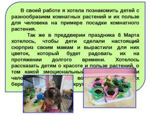 В своей работе я хотела познакомить детей с разнообразием комнатных растений
