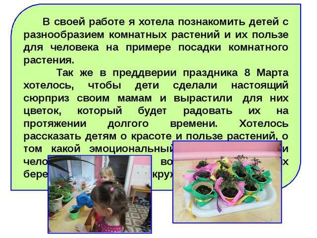 В своей работе я хотела познакомить детей с разнообразием комнатных растений...