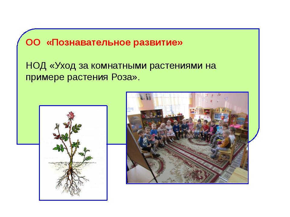 ОО «Познавательное развитие» НОД «Уход за комнатными растениями на примере ра...