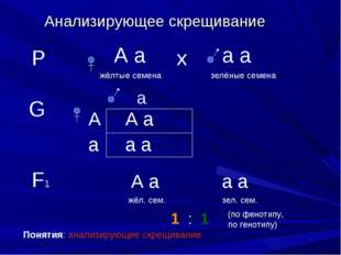 Анализирующее скрещивание Р А а жёлтые семена а а зелёные семена х G а А а А