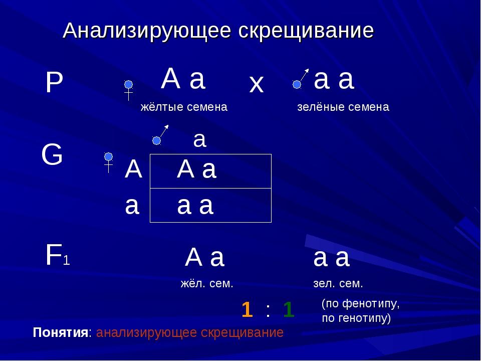 Анализирующее скрещивание Р А а жёлтые семена а а зелёные семена х G а А а А...