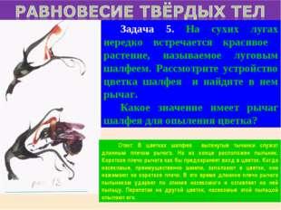 Задача 5. На сухих лугах нередко встречается красивое растение, называемое л