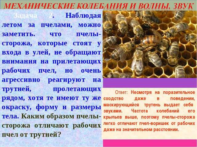 Задача 2. Наблюдая летом за пчелами, можно заметить. что пчелы-сторожа, кото...
