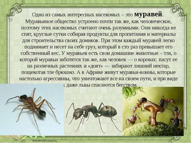 Сонник насекомые говорить о них