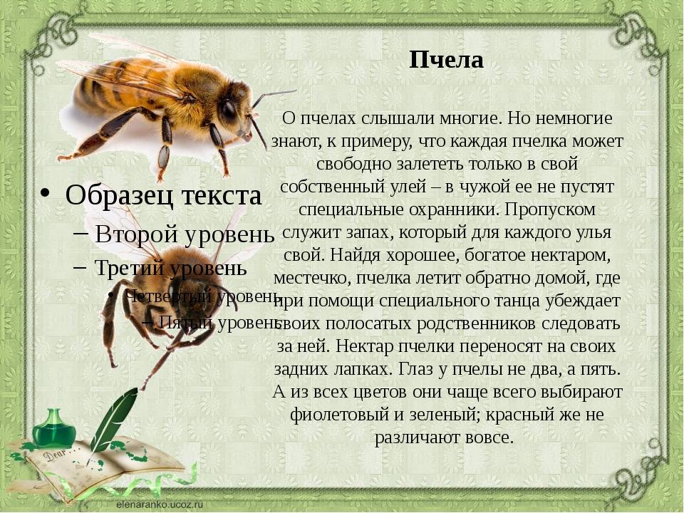 хозяева расскажи о насекомом картинки семья тебя