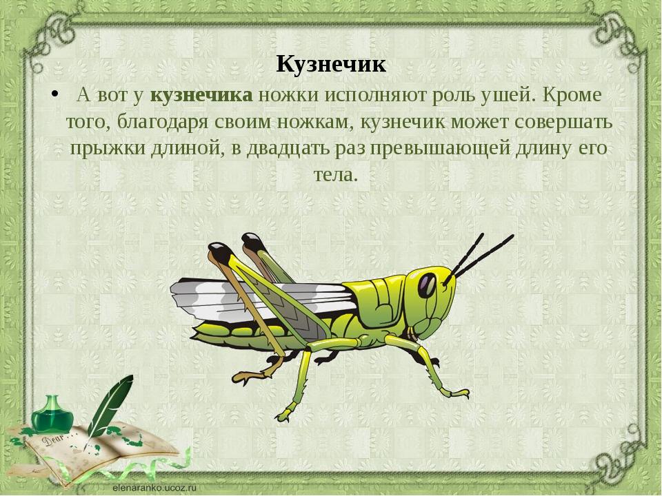 расскажи о насекомом картинки берёзка это
