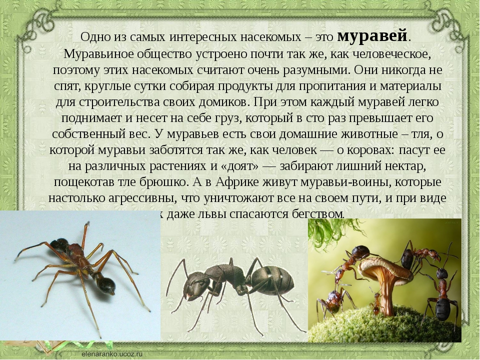 факты о муравьях в картинках оказывается, что