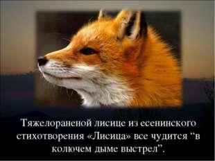 """Тяжелораненой лисице из есенинского стихотворения «Лисица» все чудится """"в кол"""