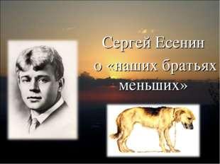 Сергей Есенин о «наших братьях меньших»