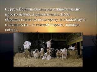Сергей Есенин относится к животным не просто нежно, а уважительно. Поэт обращ