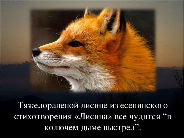 """Тяжелораненой лисице из есенинского стихотворения «Лисица» все чудится """"в кол..."""