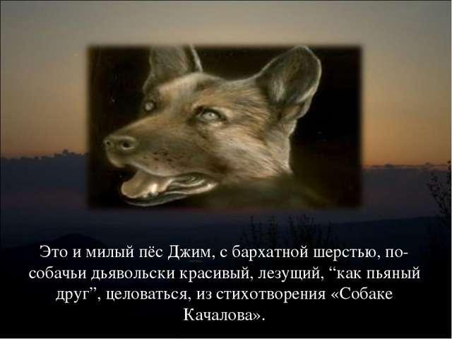 Это и милый пёс Джим, с бархатной шерстью, по-собачьи дьявольски красивый, ле...