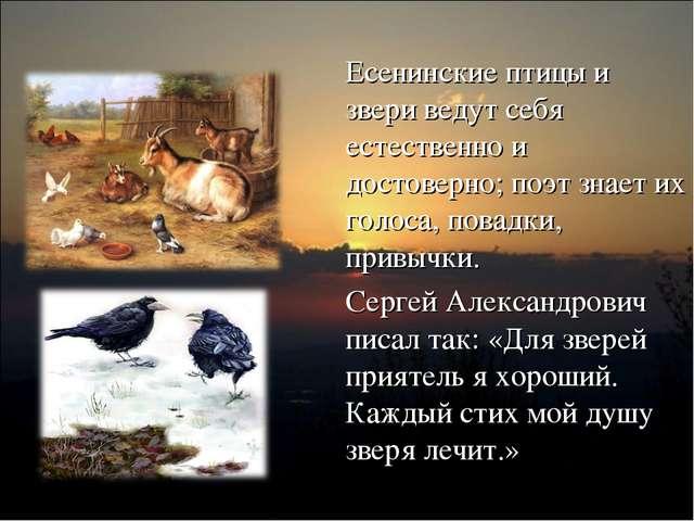 Есенинские птицы и звери ведут себя естественно и достоверно; поэт знает их г...