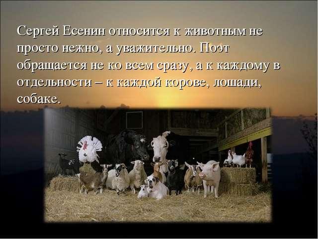 Сергей Есенин относится к животным не просто нежно, а уважительно. Поэт обращ...