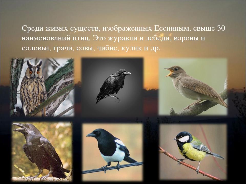 Среди живых существ, изображенных Есениным, свыше 30 наименований птиц. Это ж...