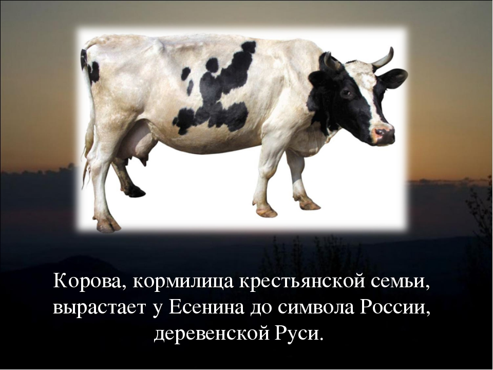 Корова, кормилица крестьянской семьи, вырастает у Есенина до символа России,...