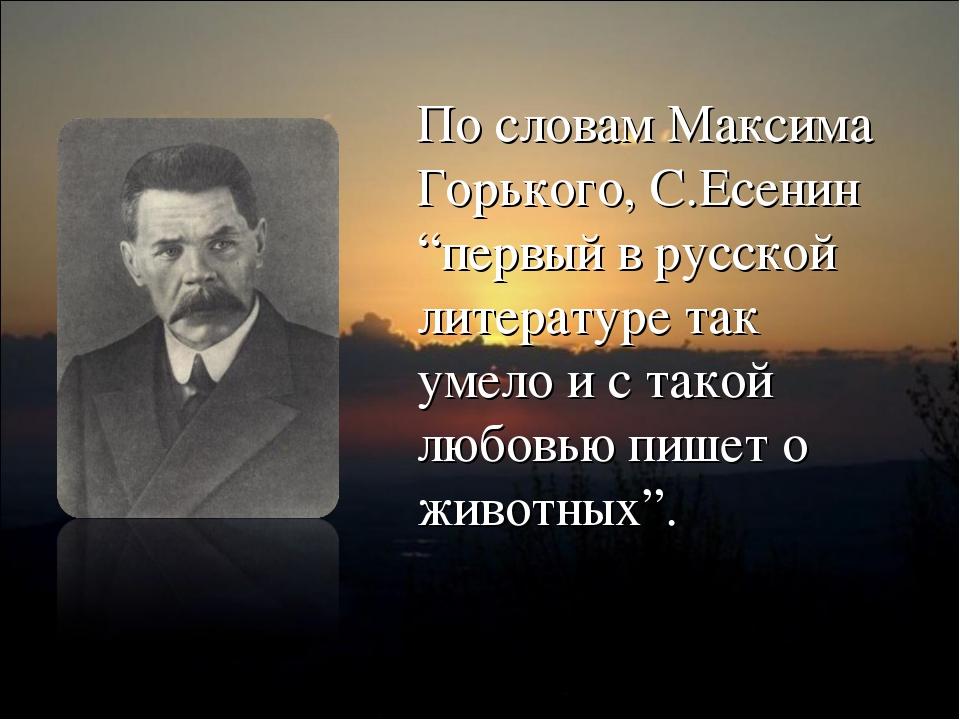 """По словам Максима Горького, С.Есенин """"первый в русской литературе так умело и..."""