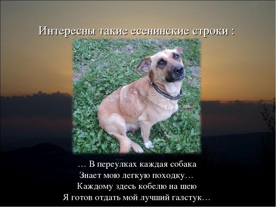 Интересны такие есенинские строки : … В переулках каждая собака Знает мою лег...