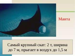 Манта Самый крупный скат: 2 т, ширина до 7 м, прыгает в воздух до 1,5 м