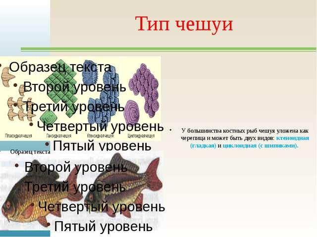 Тип чешуи У большинства костных рыб чешуя уложена как черепица и может быть д...