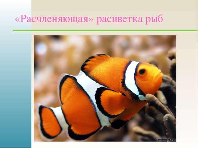 «Расчленяющая» расцветка рыб