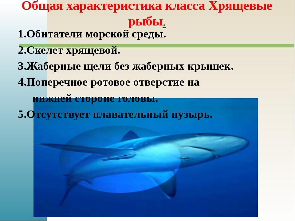 Общая характеристика класса Хрящевые рыбы. 1.Обитатели морской среды. 2.Скеле...