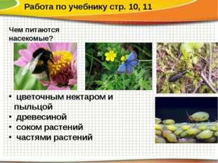 Работа по учебнику стр. 10, 11 Чем питаются насекомые? цветочным нектаром и