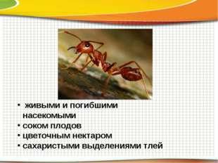 живыми и погибшими насекомыми соком плодов цветочным нектаром сахаристыми вы
