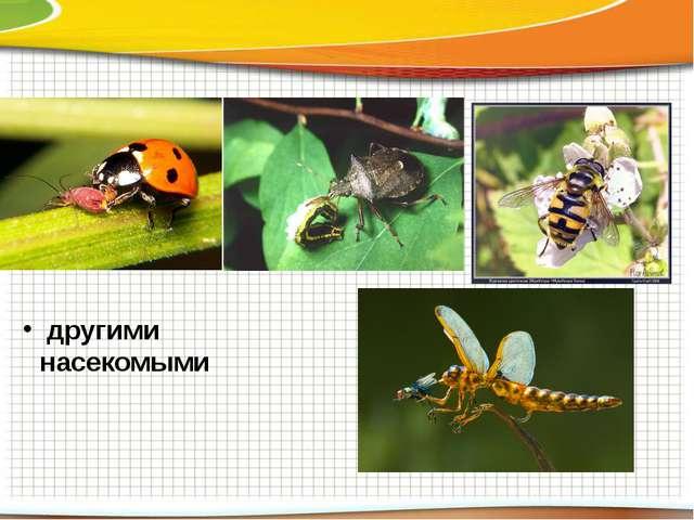 другими насекомыми