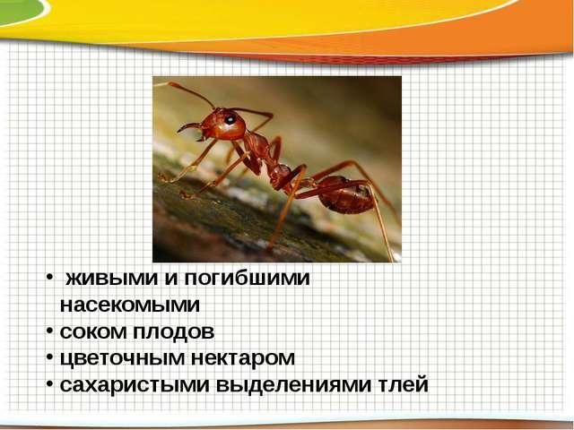 живыми и погибшими насекомыми соком плодов цветочным нектаром сахаристыми вы...