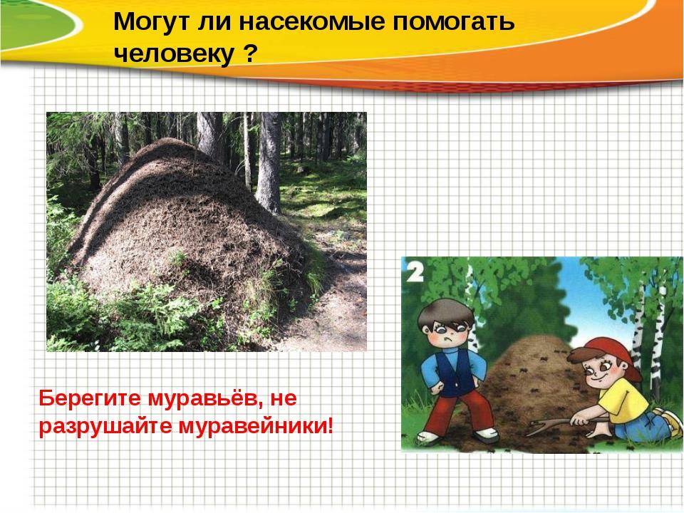 Могут ли насекомые помогать человеку ? Берегите муравьёв, не разрушайте мура...