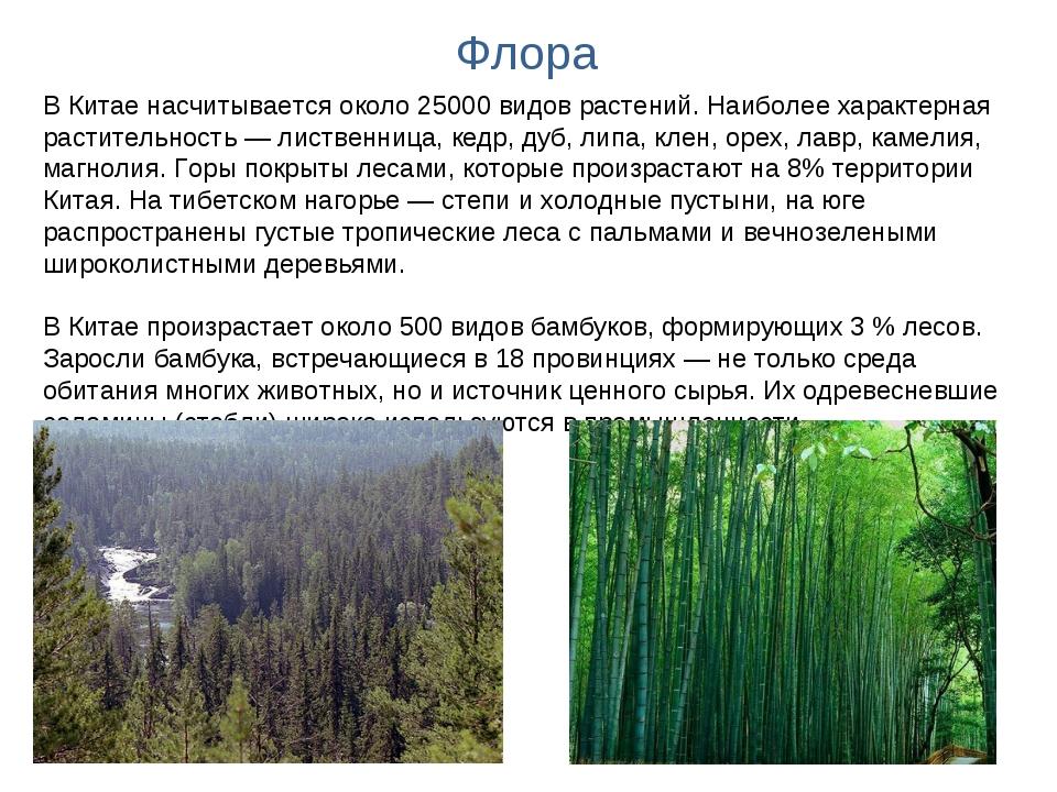 Флора В Китае насчитывается около 25000 видов растений. Наиболее характерная...
