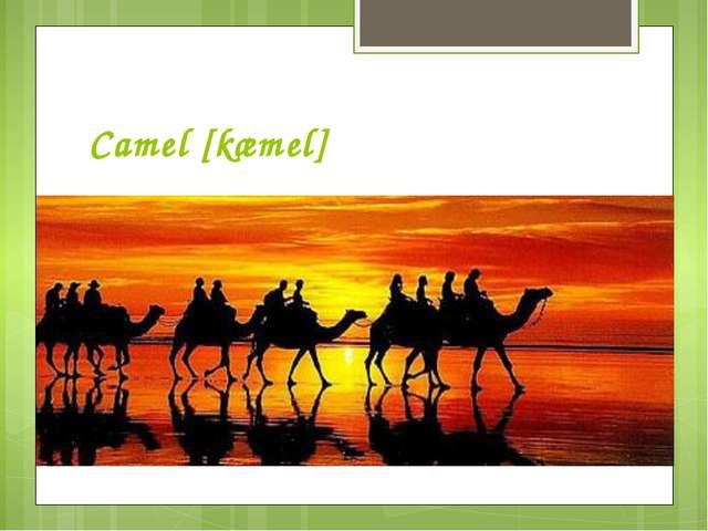 Camel [kæmel]