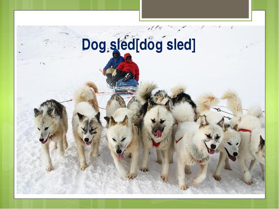 Dog sled[dog sled]
