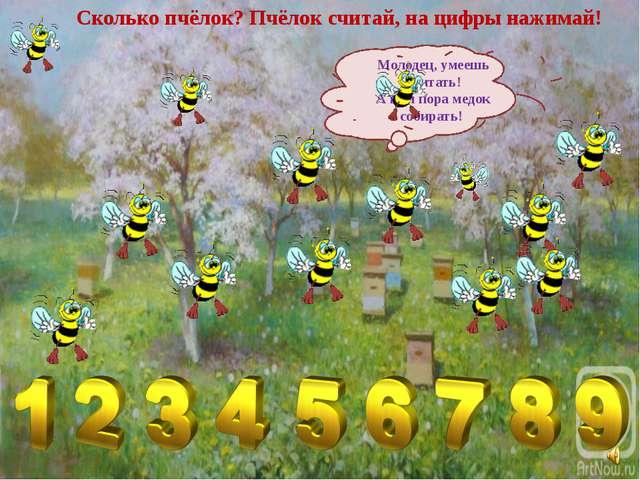 Сколько пчёлок? Пчёлок считай, на цифры нажимай! Молодец, умеешь считать! А н...