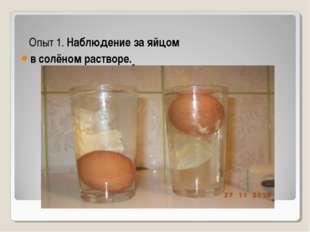 Опыт 1. Наблюдение за яйцом в солёном растворе.