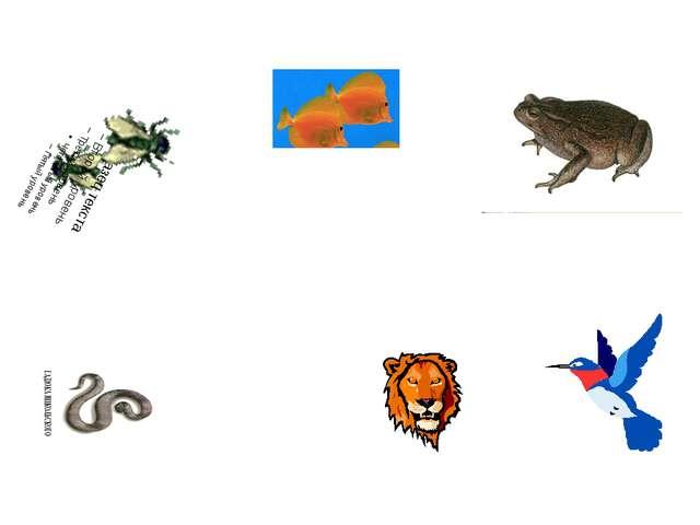 Земноводные Моллюски Рыбы Черви Пресмыкающиеся Пауки Позвоночные животные Бес...