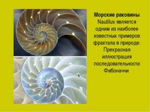 Морские раковины Nautilus является одним из наиболее известных примеров фракт