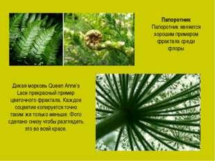 Папоротник Папоротник является хорошим примером фрактала среди флоры Дикая мо