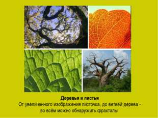 Деревья и листья От увеличенного изображения листочка, до ветвей дерева - во