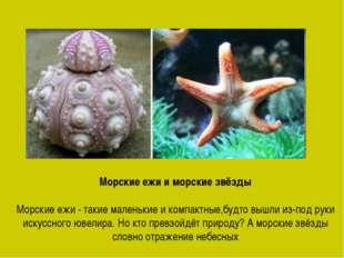 Морские ежи и морские звёзды Морские ежи - такие маленькие и компактные,будто