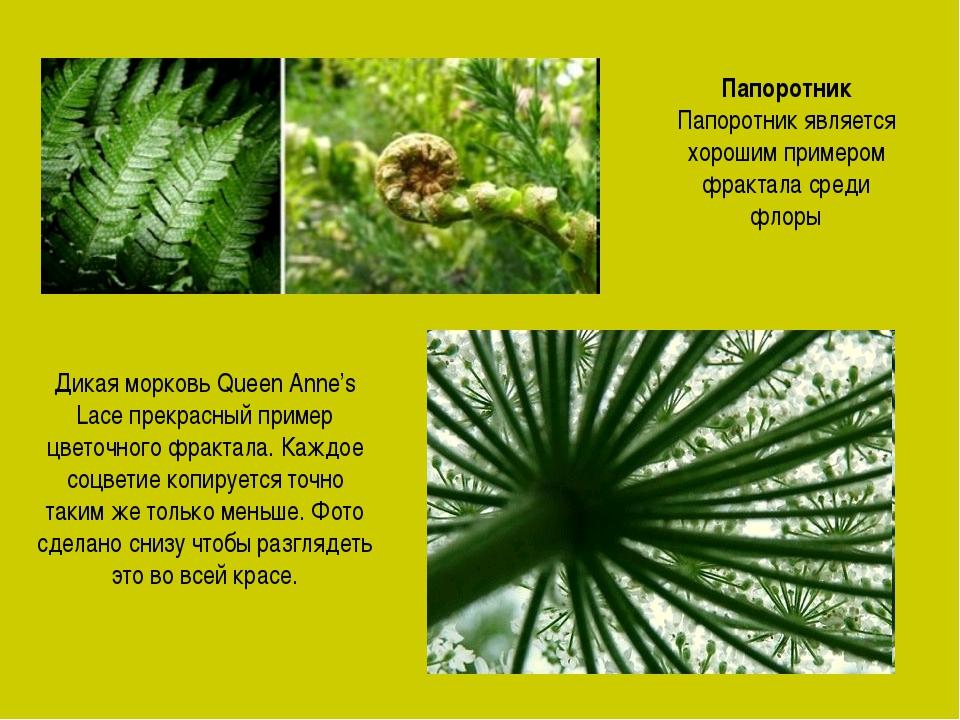 Папоротник Папоротник является хорошим примером фрактала среди флоры Дикая мо...