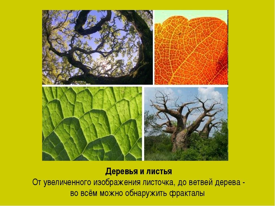 Деревья и листья От увеличенного изображения листочка, до ветвей дерева - во...