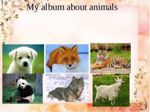 My album about animals