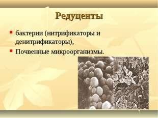 Редуценты бактерии (нитрификаторы и денитрификаторы), Почвенные микроорганизмы.
