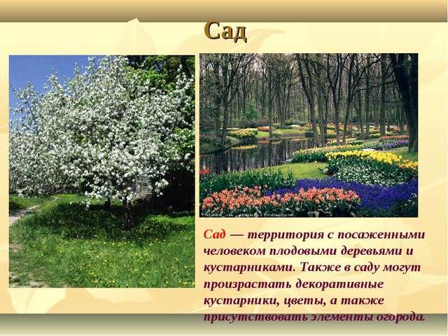 Сад Сад — территория с посаженными человеком плодовыми деревьями и кустарника...