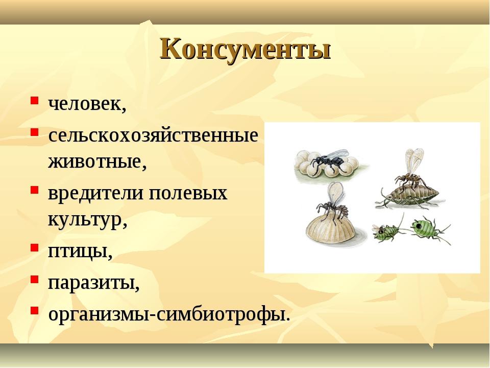 Консументы человек, сельскохозяйственные животные, вредители полевых культур,...