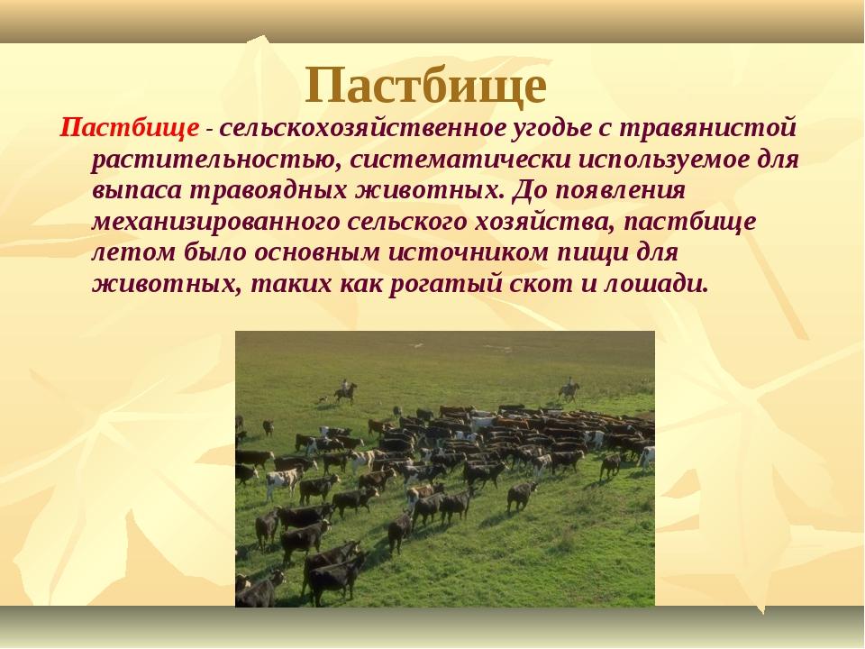 Пастбище Пастбище - сельскохозяйственное угодье с травянистой растительностью...